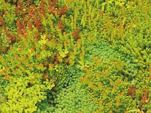 Spectraroof покривни градини